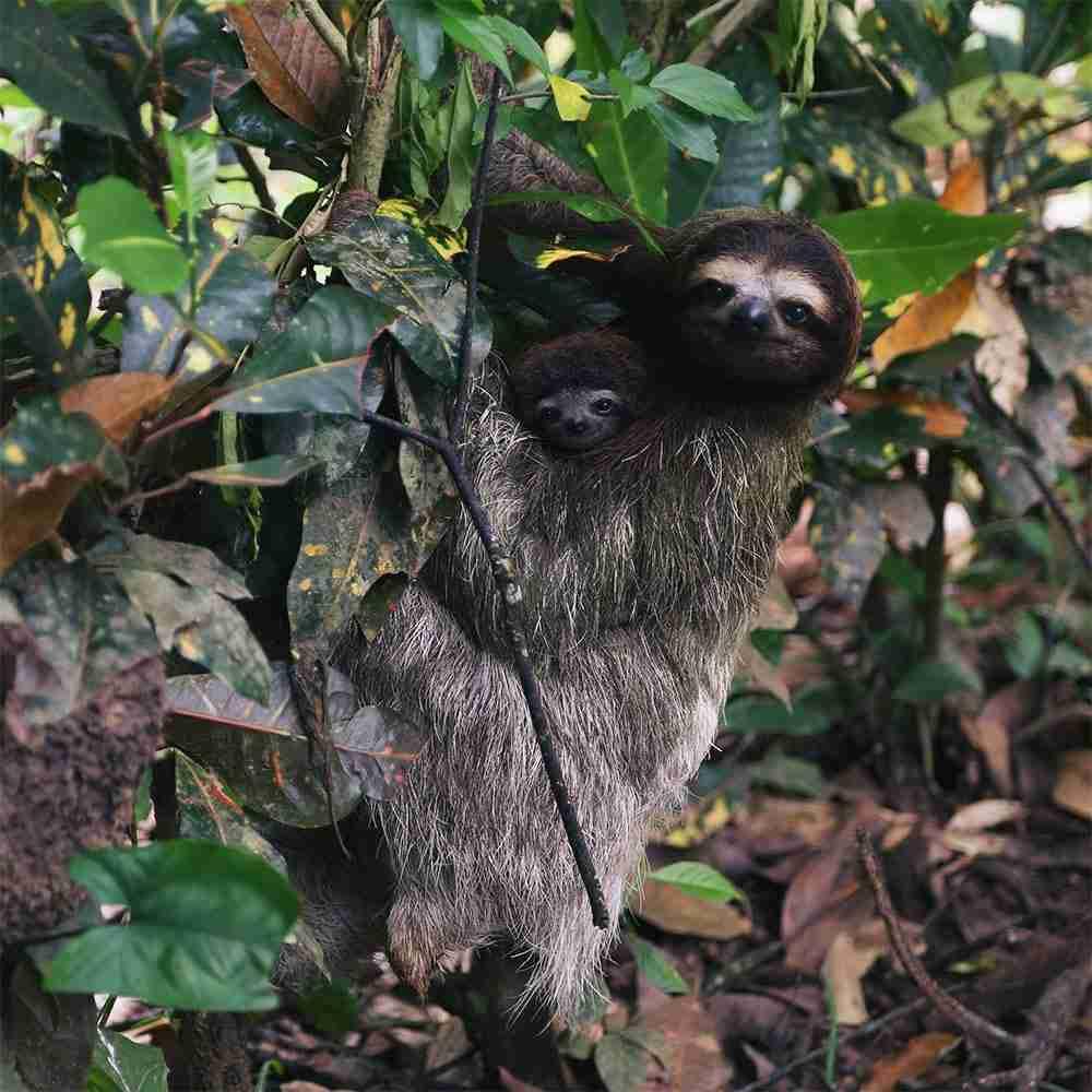 Viaggio di gruppo in Amazzonia