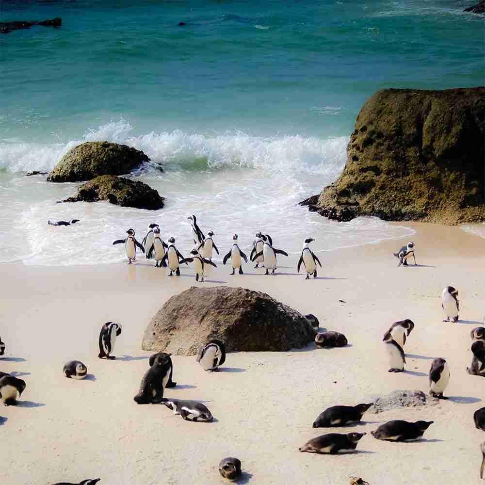 Viaggio di gruppo in Sudafrica